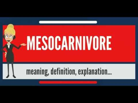 What is MESOCARNIVORE? What does MESOCARNIVORE mean? MESOCARNIVORE meaning & explanation