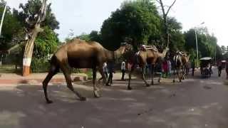 [Go Pro] India Trip 2015
