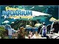 Ripley's Aquarium Of The Smokies - Gatlinburg Tennessee - Vlog with Tips
