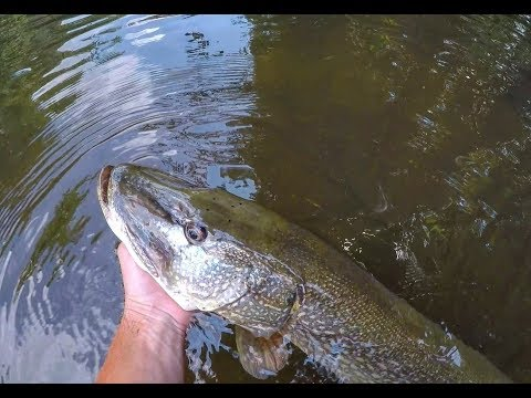 Top Water Fishing My BIGGEST PIKE EVER!!