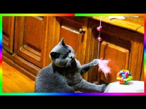 Купите коту такую игрушку Смешные животные🐱🐈