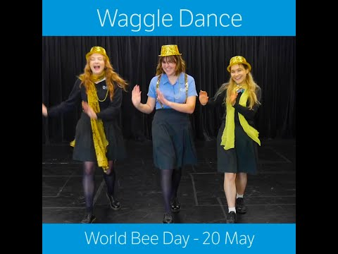 Waggle Dance For World Bee Day - 20 May 2020