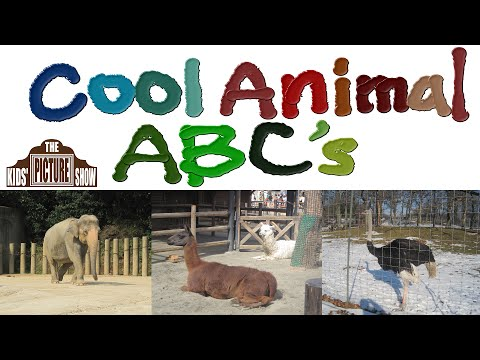 Best 25+ Animal alphabet ideas on Pinterest | Animal ...