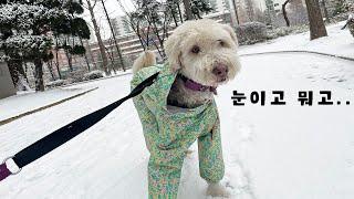눈이 오는데 세상 우울한 강아지 / 삽살개 시루