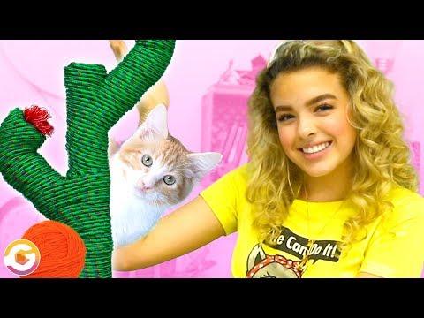 3 Fun DIY Cat Hacks! Goldieblox