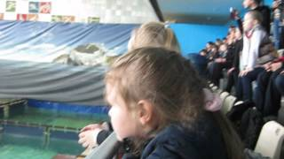 Санкт-Петербургский дельфинарий 9(, 2014-05-15T20:21:59.000Z)