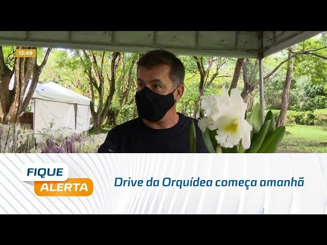 Drive da Orquídea começa amanhã no Ibama