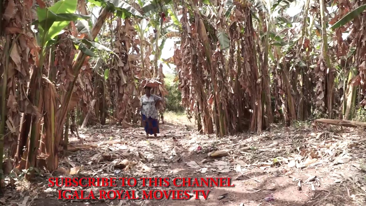 Download The best igala movies of the year, coming soon...