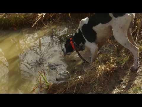 Quail Hunting On Kentucky Public Land