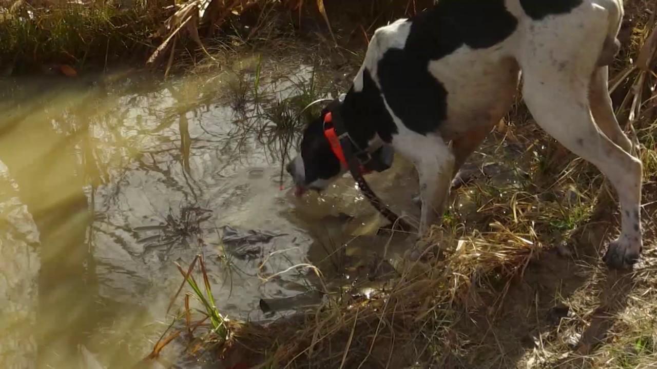 Quail Hunting On Kentucky Public Land Youtube