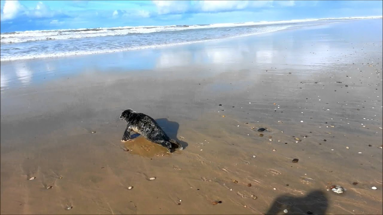 Rencontre insolite à Hourtin plage (19/01/2014)