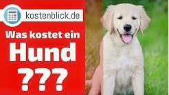 Was kostet ein Hund? - Alle Kosten und Wissenswertes im Überblick
