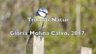 Las aves de Revenga, guía audiovisual