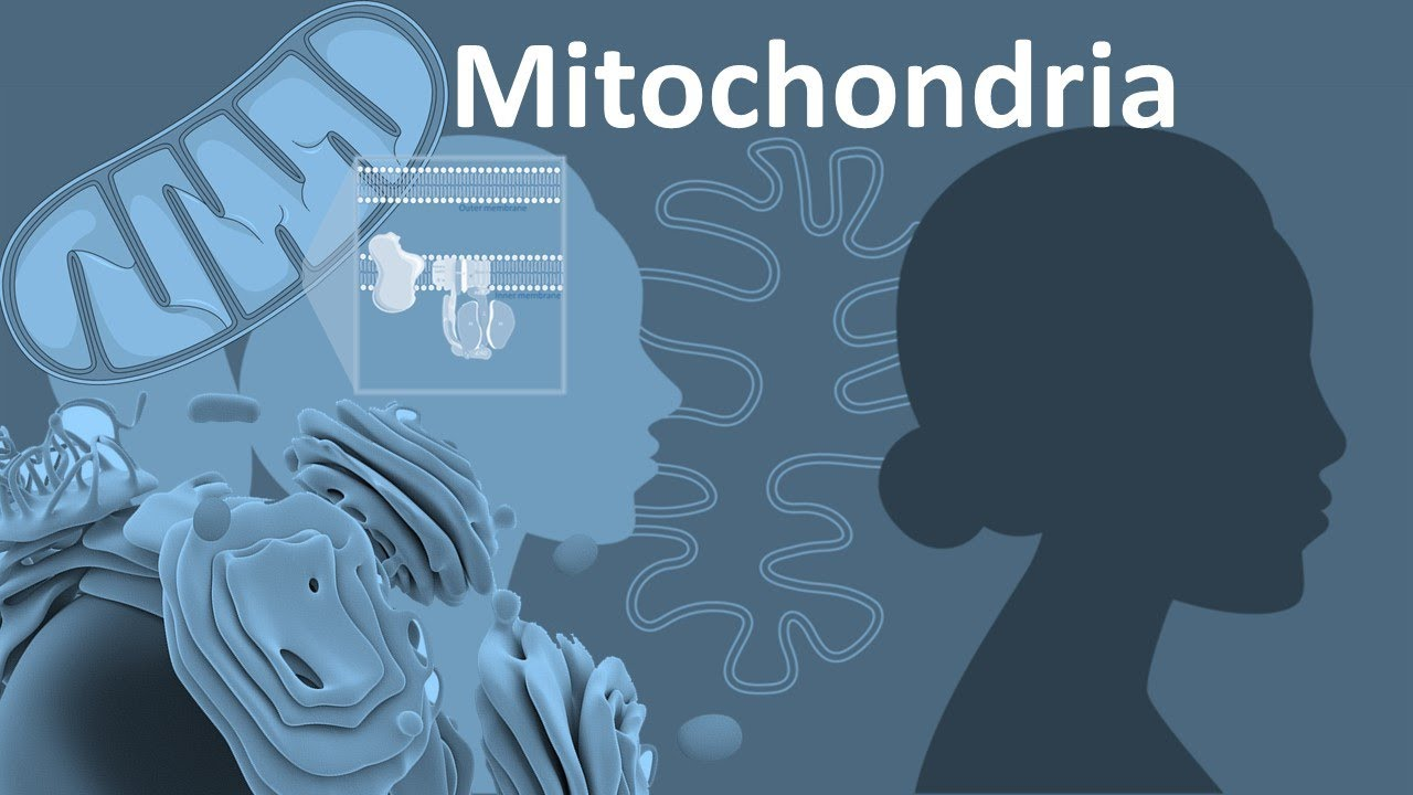 Mitochondria From Structure To Function Overview