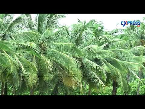 Success Story of Multi Horticulture Crop Farming by Mullapudi Murali Krishna :  Paadi Pantalu