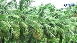 Success Story of Multi Horticulture Crop Farming by Mullapudi Murali Krishna :  Paadi Pantalu