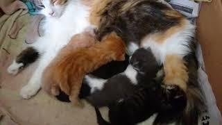 ужин - 1  мая,   котята  подрастают