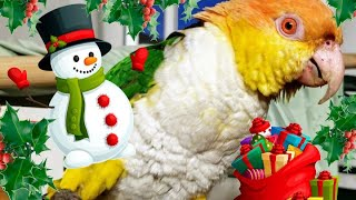 Puffman is a caique with extra spice! While decorating the bird roo...