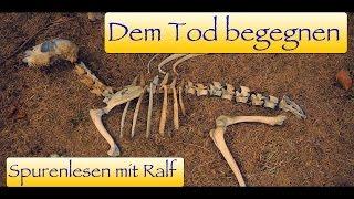 Spurenlesen / Fährtenlesen mit Ralf Teil 3 - Knochen fund