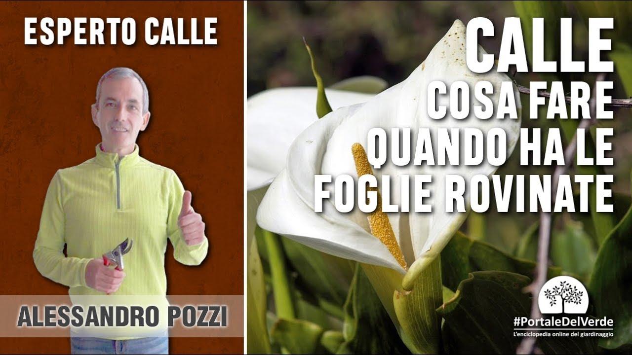 Cycas Foglie Ingiallite Cosa Fare Avatar With Cycas Foglie Ingiallite Cosa Fare Top Le Piante