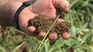 Promoting soil health through smart planting