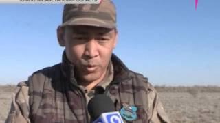 В Южном Казахстане выпустили 2000 дроф-красоток(, 2014-04-15T18:01:55.000Z)