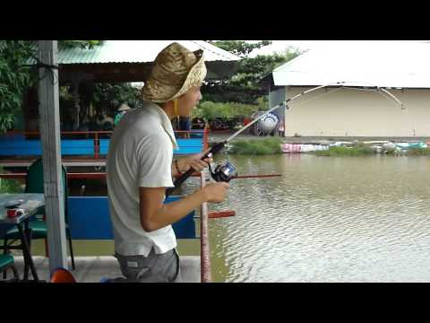 Câu Cá Chép - thegioicauca.com