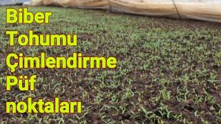95 Biber yetiştiriciliği biber tohumu nasıl fire vermeden çimlendirilir. Biber ekimi mersin tarsus
