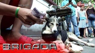 Brigada: Blackjack, the breadwinner dog