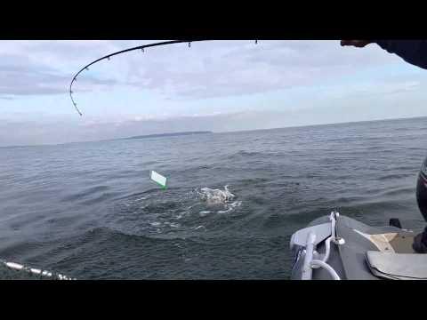 Fishing For Pink Salmon. Bowen Island Bc