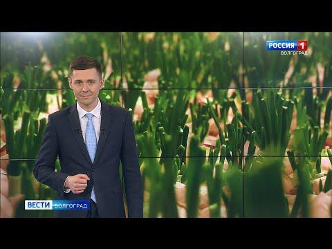 Вести-Волгоград. Выпуск 06.02.20 (20:45)