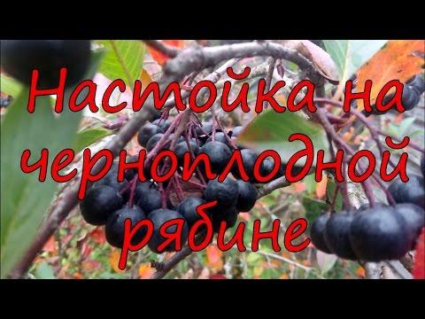 Черноплодная рябина: сорта, выращивание и уход