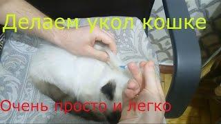Как сделать укол кошке в холку