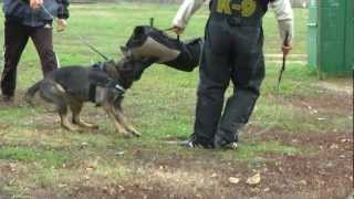 Protective Cover With Velcro For Police Dog Training,  Code: 144pe