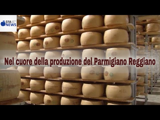 Nel cuore della produzione del Parmigiano Reggiano