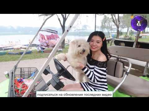 Красивая девушка и ее непослушный пес играет в машине
