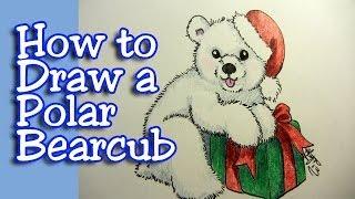 How to draw a polar bearcub