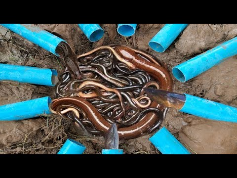 Amazing Smart Boys Deep 11 PVC Hole Trap Catch A lot of Eels & Crabs in my Village