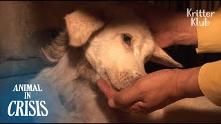 Dog Trembling With Seizure Starves, But Waits For An Owner Who Abandoned Her |Animal in Crisis EP108