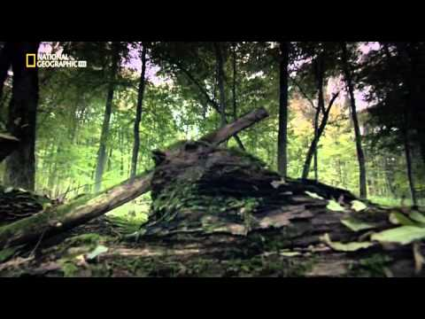 National Geographic- I Mostri Di Hitler ITA