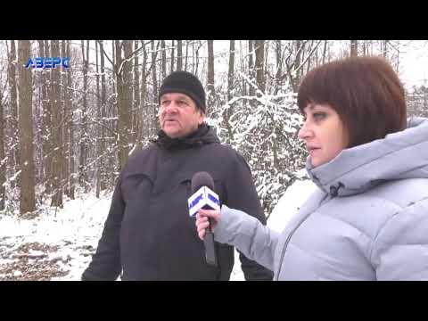 ТРК Аверс: Ліс у «Цуманській пущі» рубає фірма екс-депутата Волиньради