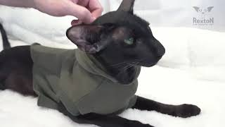 How To Trim Cat's Nails At Home   Oriental Shorthair Cat