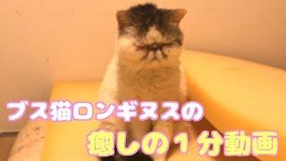 飼い主さんの問いかけに答えようとするも眠気が勝ってしまう猫