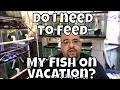 How long can my fish go without eating Fish Room VLOG do I need to feed my fish when i am on vacatio