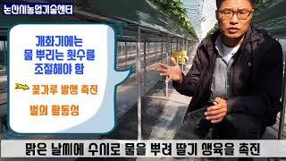 논산딸기재배 현장컨설팅.응애방제