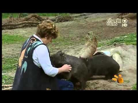 felix und die wilden tiere