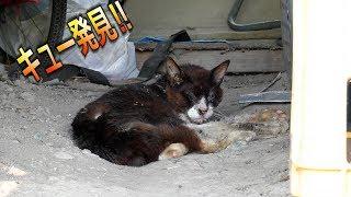 【地域猫】酷暑の中で安否確認‼キューを探せ‼【魚くれくれ野良猫製作委員会】 thumbnail