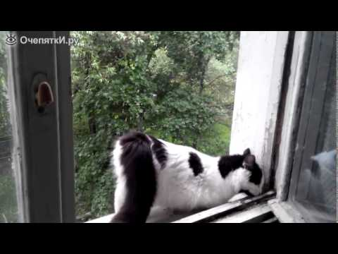 Вопрос: Почему когда кота гладишь, он попу поднимает?