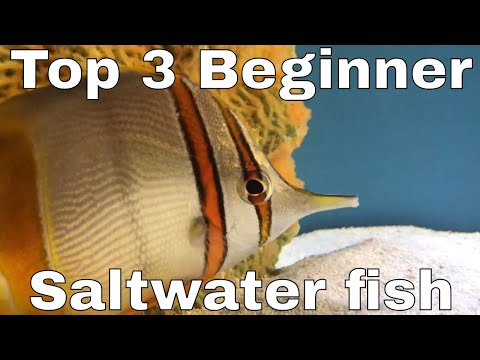 My TOP THREE Beginner Marine / Saltwater Fish For A LARGE Tank