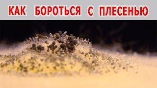 видео Профилактика возникновения грибка в доме